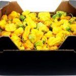 Hot Pepper, Chilischote, Piment, Pilli-Pilli 3,6kg Box