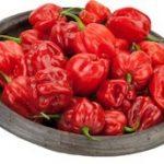 Red Hot Pepper Habanero Chilischote Piment Pilli-Pilli 3,6kg Box