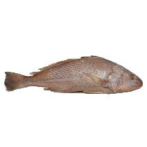 Yellow Croaker, Kassava Fish, Bar, Capitaine 10kg Box