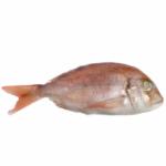 Dorade, Denton, Red Snapper, Red Fish 10kg Box