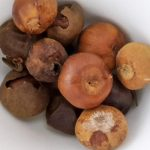 Rondelle Country Onion, Bobimbi, Olum 25g