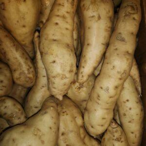 African Sweet potatoes, Süßkartoffel, Patates douce blanche 1kg