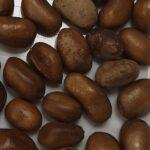 Pébé African Nutmeg, False Nutmeg, African Muscad 70g